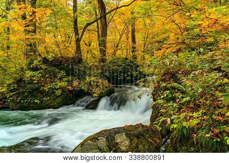Beautiful Oirase Mountain Stream Flow Passing The Colorful Foliage In Autumn Season Forest At Oirase