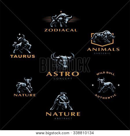 Muscular Bull Or Taurus With Horns. Set Of Vector Illustrations