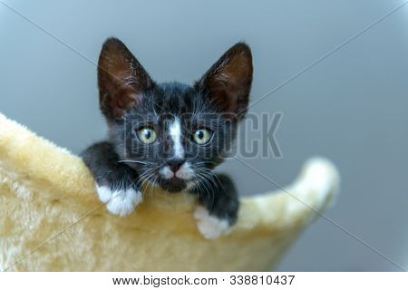 Young kitten playing on her cat tree scratcher