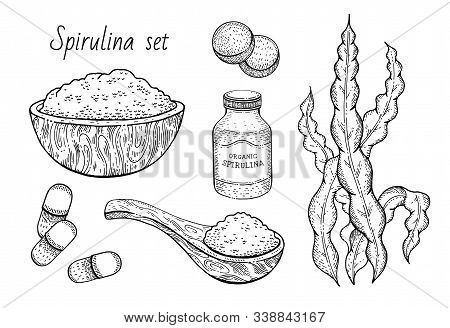 Spirulina Seaweed Set. Hand Drawn Sea Plant, Super Food Engraved Drawing. Spirulina Superfood Detox