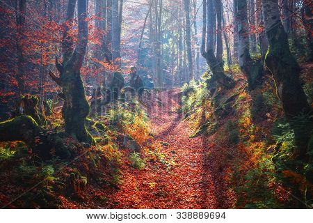 Sunny Autumn Woodland With Haze And Sunlight. Footpath Covered With Red Foliage In Fall Forest Lands