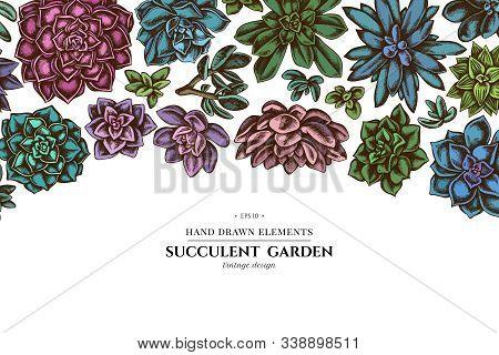 Floral Design With Colored Succulent Echeveria, Succulent Echeveria, Succulent Stock Illustration