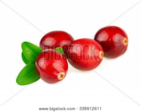 Cranberries Red Fresh Cranberry With Green Leaf On White Background