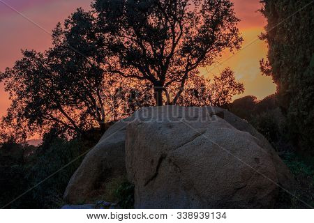 Tree Backlit With Rock In Sunset. Light Concept