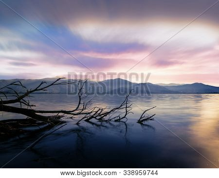 In Images Trees In Flooded Water In Lake Maggiore After Heavy Rains, Northern Italy