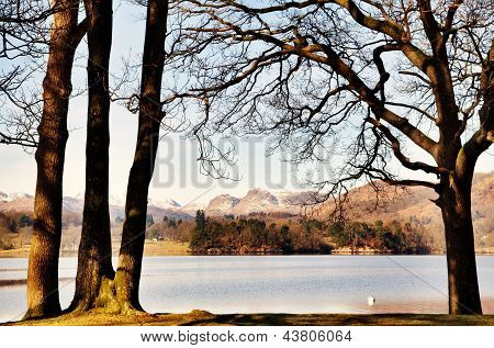 Trees framing Windermere and the Langdale Pikes