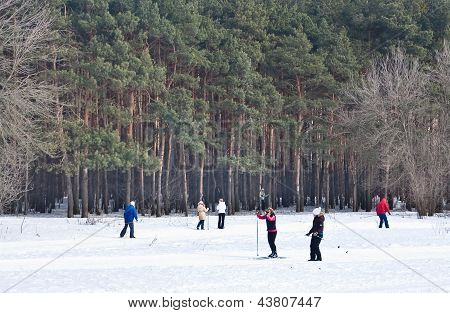 Cross-country Skiing In The Woods
