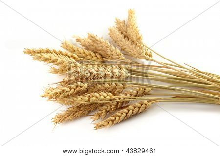 Stalks of wheat ears