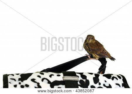 Little cute bird on a handbag handle isolated