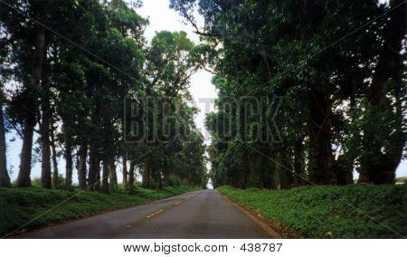 Tree Lined Street Kauai Hawaii