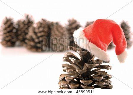 Photo of Hohoho pine