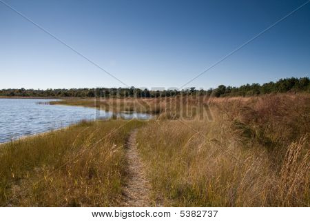 Lakeside Path Through Grass