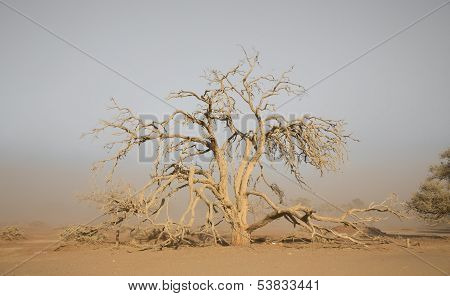Sandstorm and tree