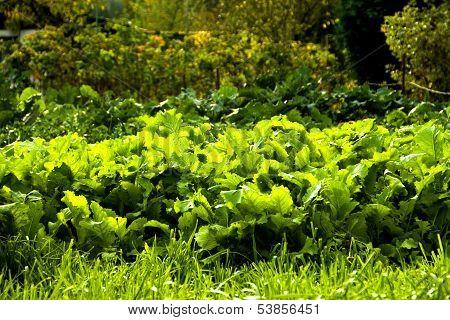 with fresh garden salad