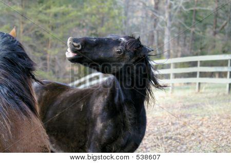Horse Squabble