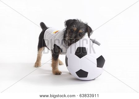Cute terrier puppy with a Germany jersey poster