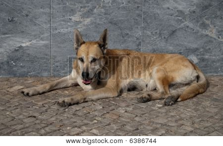 Dog Is Laying On The Street
