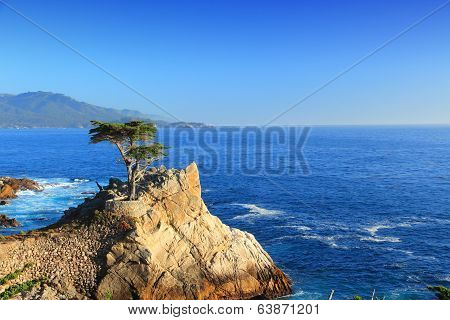 Lone Cypress, California