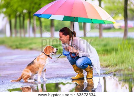 Woman With His Beagle Dog Sitting Ander Big Bright Umbrella