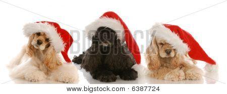 Cocker Spaniel Santas