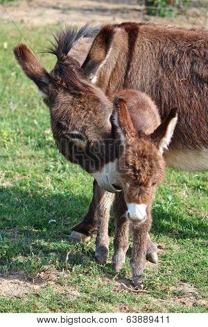 Donkey with newborn foal