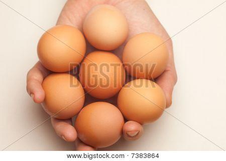 Hand Holding Seven Eggs