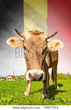 Cow with flag on background series - Belgium poster