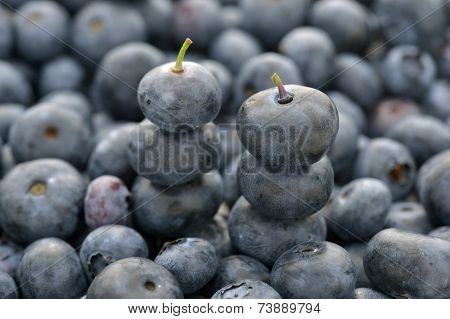Two Stacked Blueberry