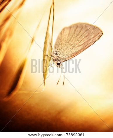 Beautiful aged grunge photo of butterfly sitting on plant, flora and fauna on spring time, little insect with wings, retro style picture poster