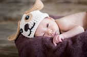 funny sleepy cute newborn baby in a knitted hat dogs poster