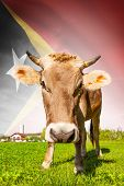Cow with flag on background series - East Timor poster
