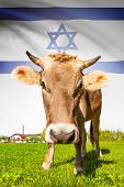 Cow with flag on background series - Israel poster