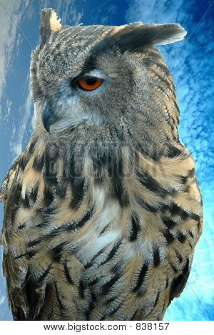 Eagle owl and clouds and sky poster