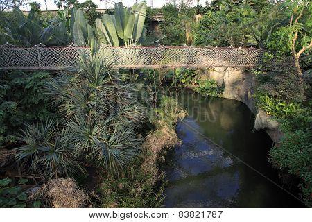 Hanging bridge in a rainforest