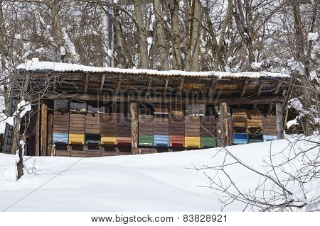 Gotthard Massif (switzerland) - Beehives At Snow