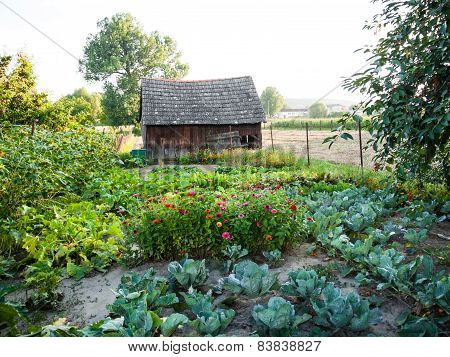 Fresh Vegetables Garden