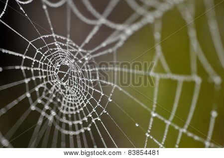 Water Droplets On The Spider's Web