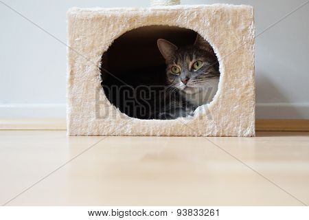 cat in hideaway
