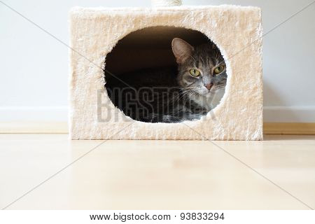 cat in box shaped hideaway