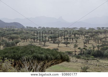 Homhil Plateau, desert landscape, Socotra Island, Yemen
