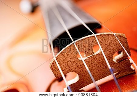 Close Up Of Violin Bridge And Strings