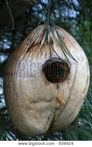 Coconut Birdhouse