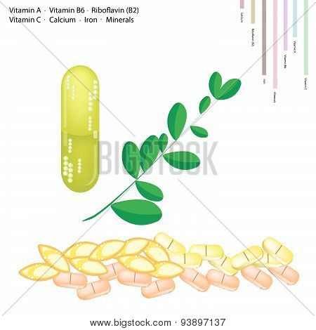 Fresh Moringa Leaves With Vitamin A, B6, B2 And C