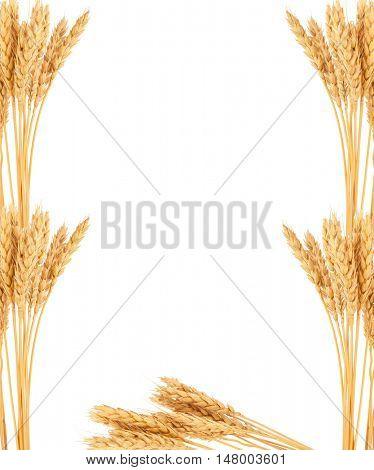Ears of wheat. Frame