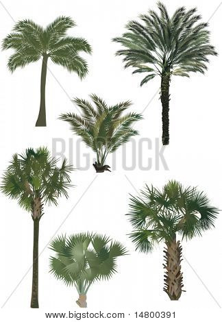 illustration with six palm trees isolated on white background
