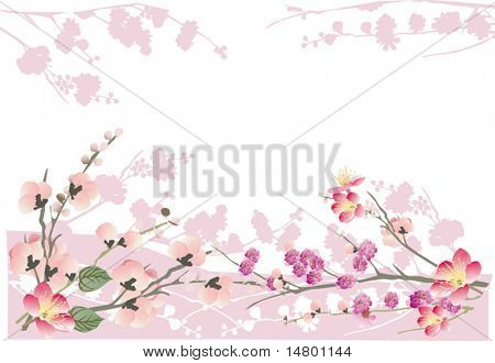 illustration with cherry tree flowers on white background