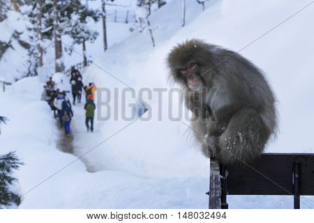 displeased monkey in front of a crowd of tourists