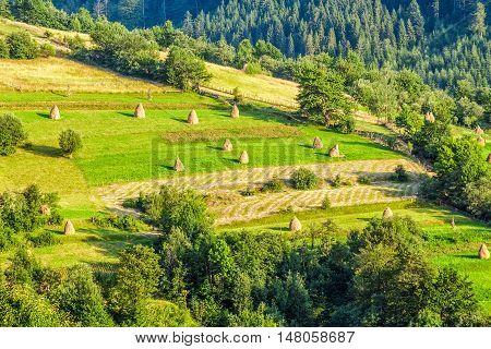 Rural Field On Hillside