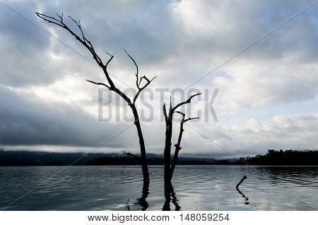 Dead tree in water in Ratchaprapha dam Surat Thani Thailand.