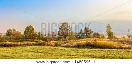 Yellow Trees In Fog On The Meadow